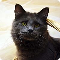 Adopt A Pet :: Baron-PENDING - Bristol, CT
