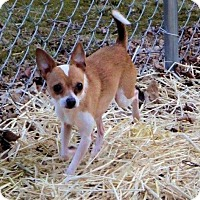Adopt A Pet :: Polo - Fairmont, WV