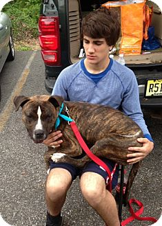 Pit Bull Terrier Mix Dog for adoption in Wanaque, New Jersey - logan