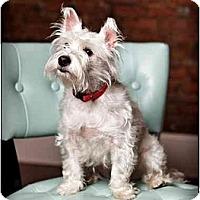 Adopt A Pet :: Bailey - Owensboro, KY