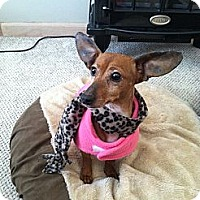 Adopt A Pet :: Dutchess - Cleveland, OH