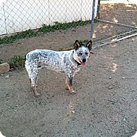 Adopt A Pet :: Ghost - Phoenix, AZ