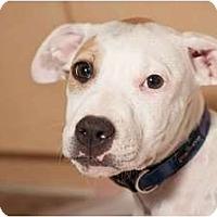 Adopt A Pet :: Frankie - Mesa, AZ