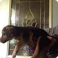 Adopt A Pet :: Ben - Kendall, NY