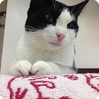 Adopt A Pet :: Muffin - Trevose, PA