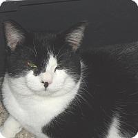 Adopt A Pet :: Sambo - Pensacola, FL