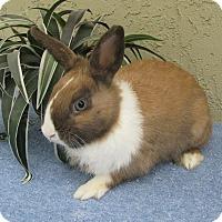Adopt A Pet :: Hemmingway - Bonita, CA