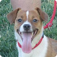 Adopt A Pet :: Tiny Tim - Turlock, CA