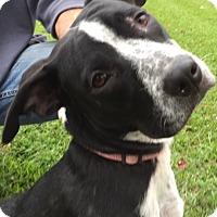 Adopt A Pet :: Bella - Madisonville, LA