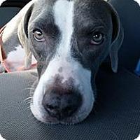 Adopt A Pet :: Macy - Gainesville, FL