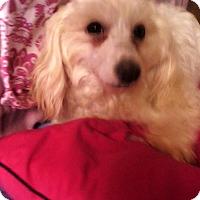 Adopt A Pet :: Muna - El Cajon, CA