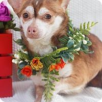 Adopt A Pet :: Jimmy - Loomis, CA