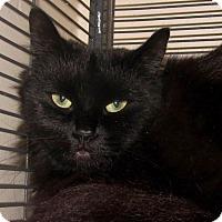 Adopt A Pet :: Fluff - New Windsor, NY