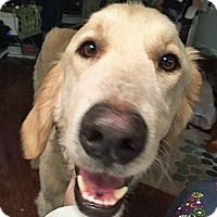 Adopt A Pet :: Maisie II - BIRMINGHAM, AL