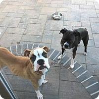 Adopt A Pet :: Kirby - Alameda, CA