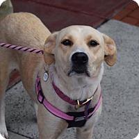 Adopt A Pet :: Luna - Willingboro, NJ