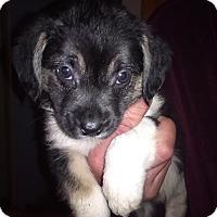 Adopt A Pet :: Hana - Kendall, NY