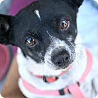 Adopt A Pet :: Pompeii - Idyllwild, CA