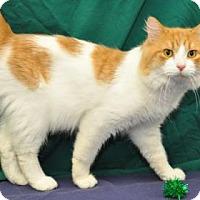 Adopt A Pet :: Hea Pea - South Bend, IN