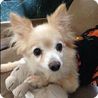 Adopt A Pet :: Queenie - Alpharetta, GA