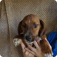 Adopt A Pet :: Tamara - Oviedo, FL