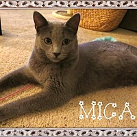 Adopt A Pet :: Mica - Eagan, MN
