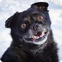 Adopt A Pet :: Cricket - Holliston, MA