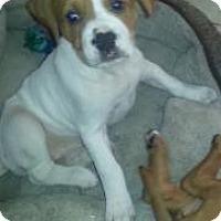 Adopt A Pet :: Charlotte - Marlton, NJ