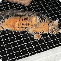 Adopt A Pet :: Mercedes - Jeffersonville, IN