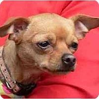 Adopt A Pet :: Penny Lane - San Francisco, CA