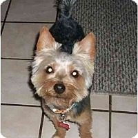Adopt A Pet :: Huey - Gulfport, FL