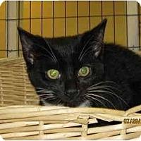 Adopt A Pet :: Tipper - Catasauqua, PA