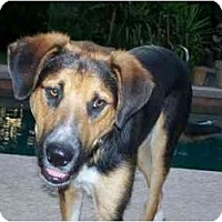 Adopt A Pet :: Neo - Scottsdale, AZ