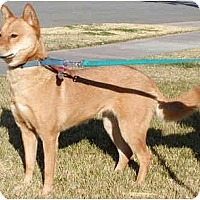 Adopt A Pet :: Kumara - Marysville, CA
