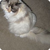 Adopt A Pet :: Roxy - Loveland, CO
