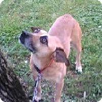 Adopt A Pet :: Shotgun - Brattleboro, VT
