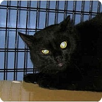 Adopt A Pet :: Barn Cats - Perkee - Colmar, PA