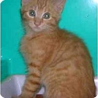 Adopt A Pet :: Jack - Chesapeake, VA