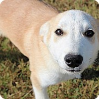 Adopt A Pet :: Fisher ($50 off) - Staunton, VA
