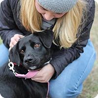 Adopt A Pet :: Emelia - Mount Laurel, NJ