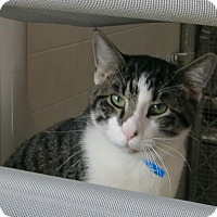Adopt A Pet :: Spencer - Geneseo, IL