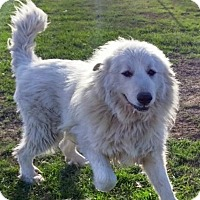 Adopt A Pet :: Bayer KY - Rockaway, NJ