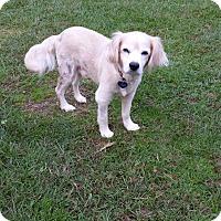 Adopt A Pet :: Murphy - Berkeley Heights, NJ