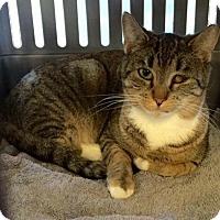 Adopt A Pet :: Katie - Wanaque, NJ