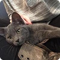 Adopt A Pet :: Merida - Gainesville, FL
