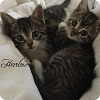 Adopt A Pet :: Harlow & Willow - Island Park, NY