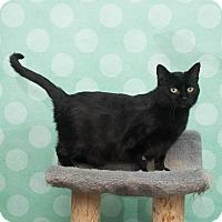 Adopt A Pet :: Darla - Chippewa Falls, WI
