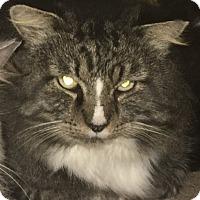 Adopt A Pet :: Tucker - Bonita Springs, FL
