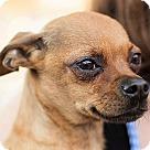 Adopt A Pet :: Fawn