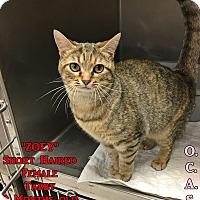 Adopt A Pet :: T-9 Zoey - Triadelphia, WV